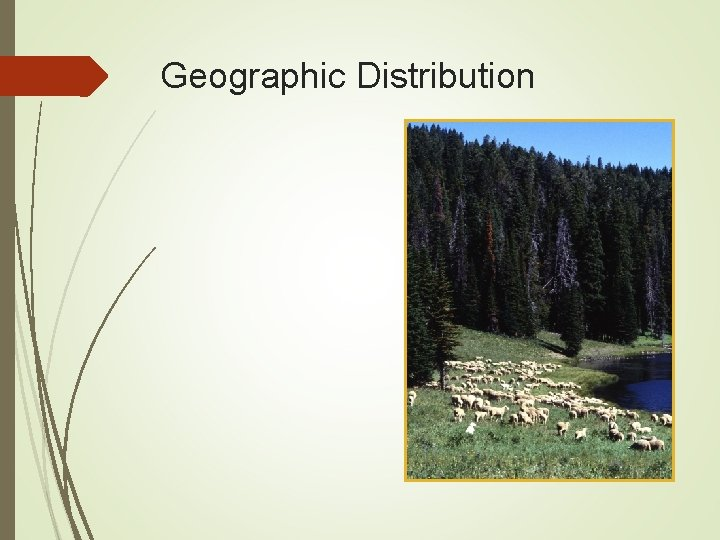 Geographic Distribution Found worldwide in sheep-raising countries United States Western states most affected Orf