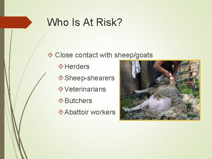 Who Is At Risk? Close contact with sheep/goats Herders Sheep-shearers Veterinarians Butchers Abattoir workers