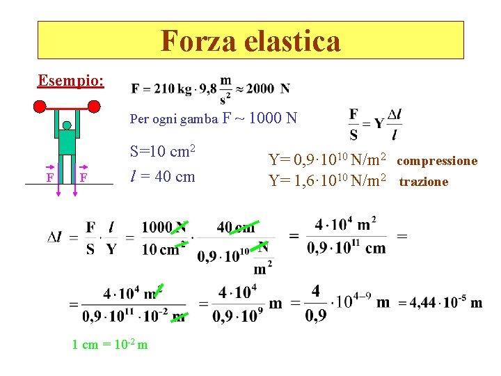 Forza elastica Esempio: Per ogni gamba F F S=10 cm 2 l = 40