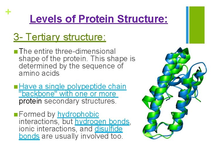 + Levels of Protein Structure: 3 - Tertiary structure: n The entire three-dimensional shape