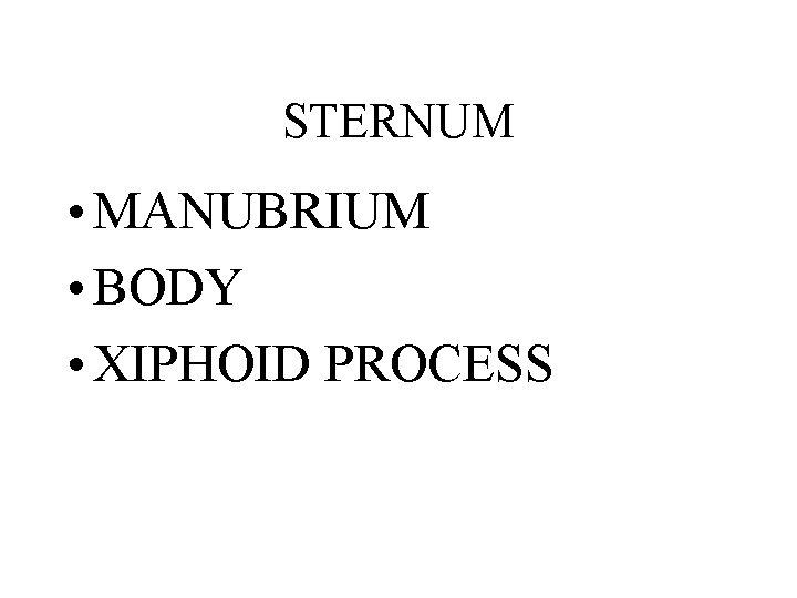 STERNUM • MANUBRIUM • BODY • XIPHOID PROCESS