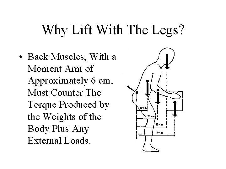 Why Lift With The Legs? • Back Muscles, With a Moment Arm of Approximately