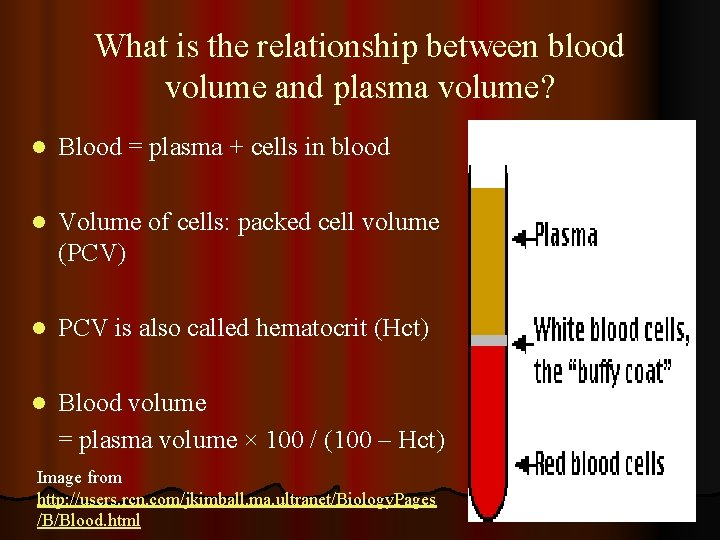 What is the relationship between blood volume and plasma volume? l Blood = plasma