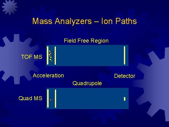 Mass Analyzers – Ion Paths Field Free Region TOF MS Acceleration Detector Quadrupole Quad