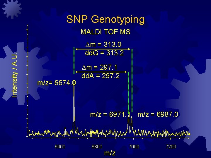SNP Genotyping Intensity / A. U. MALDI TOF MS Dm = 313. 0 dd.