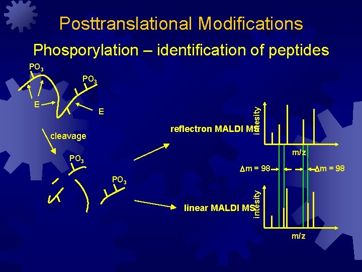 Posttranslational Modifications Phosporylation – identification of peptides PO 3 E reflectron MALDI MS cleavage