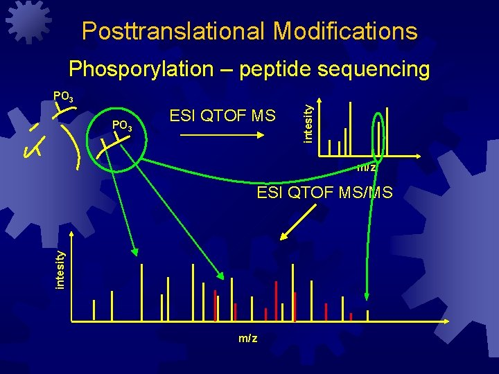 Posttranslational Modifications Phosporylation – peptide sequencing PO 3 ESI QTOF MS intesity PO 3