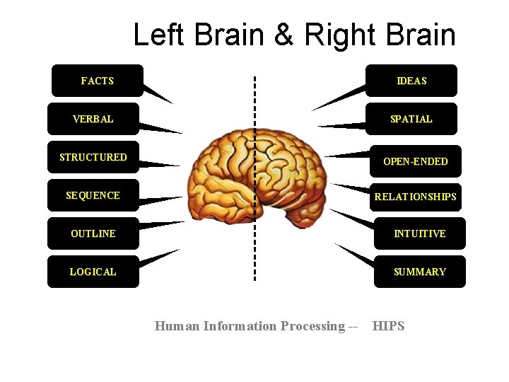 Left Brain & Right Brain FACTS IDEAS VERBAL SPATIAL STRUCTURED OPEN-ENDED SEQUENCE RELATIONSHIPS OUTLINE