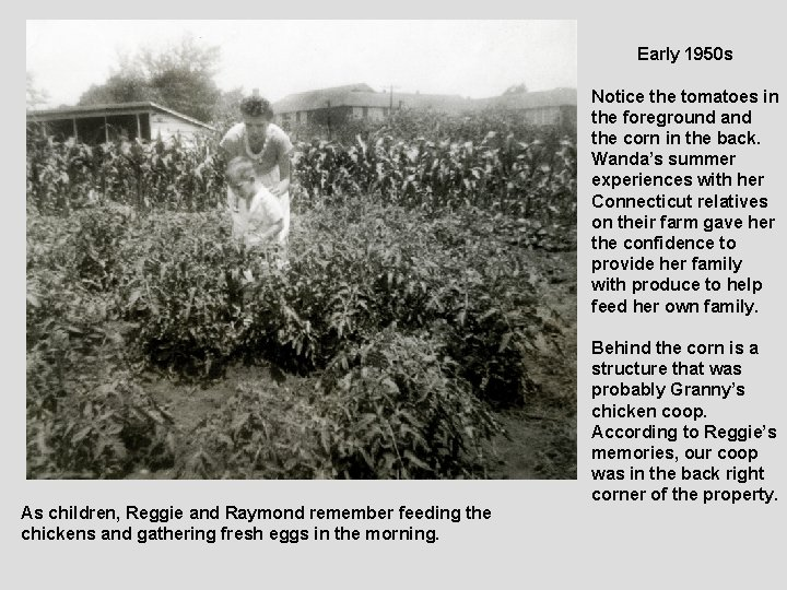 Early 1950 s Notice the tomatoes in the foreground and the corn in the