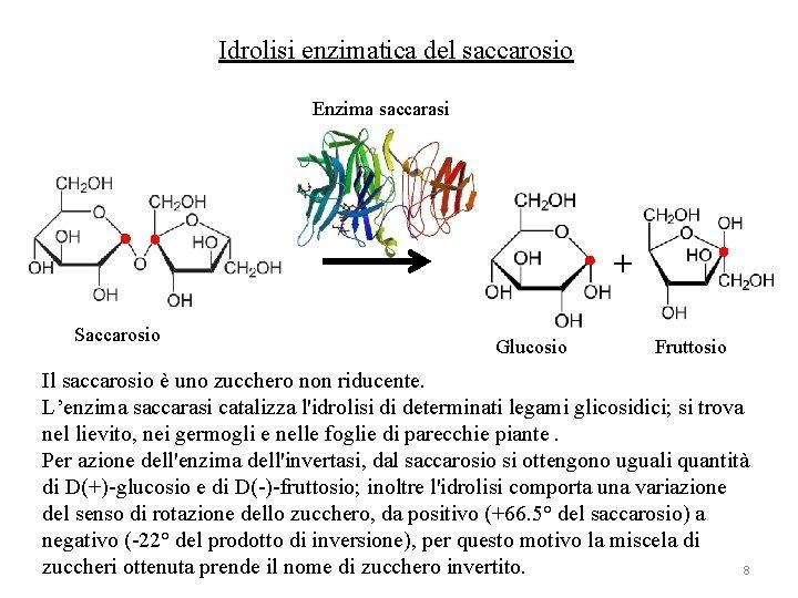 Idrolisi enzimatica del saccarosio Enzima saccarasi + Saccarosio Glucosio Fruttosio Il saccarosio è uno