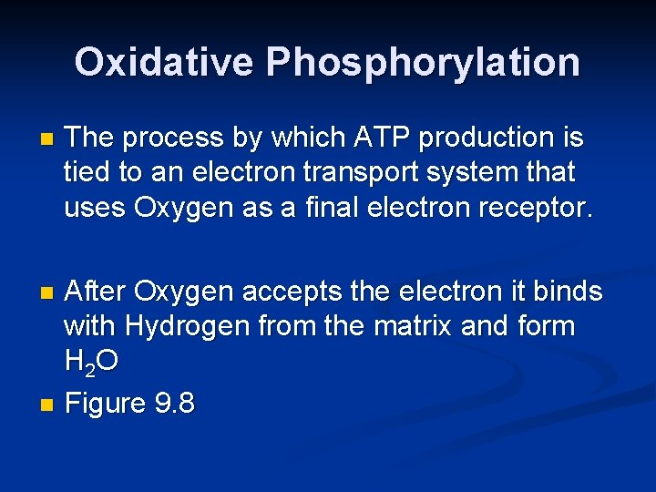 Oxidative Phosphorylation n The process by which ATP production is tied to an electron