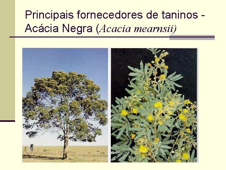 Principais fornecedores de taninos Acácia Negra (Acacia mearnsii)