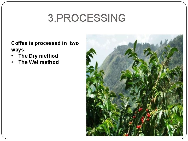 3. PROCESSING Coffee is processed in two ways • The Dry method • The