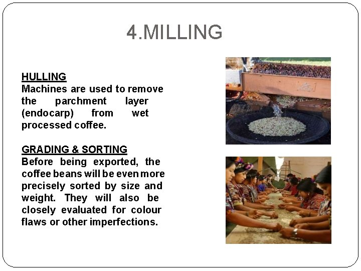 4. MILLING HULLING Machines are used to remove the parchment layer (endocarp) from wet
