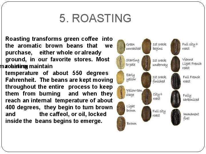 5. ROASTING Roasting transforms green coffee into the aromatic brown beans that we purchase,