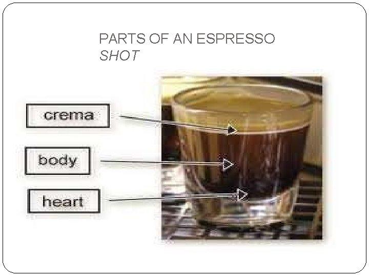 PARTS OF AN ESPRESSO SHOT