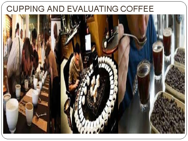 CUPPING AND EVALUATING COFFEE