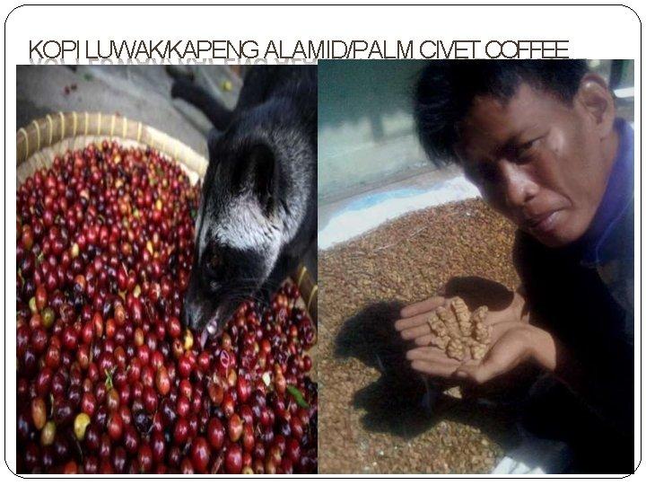 KOPI LUWAK/KAPENG ALAMID/PALM CIVET COFFEE