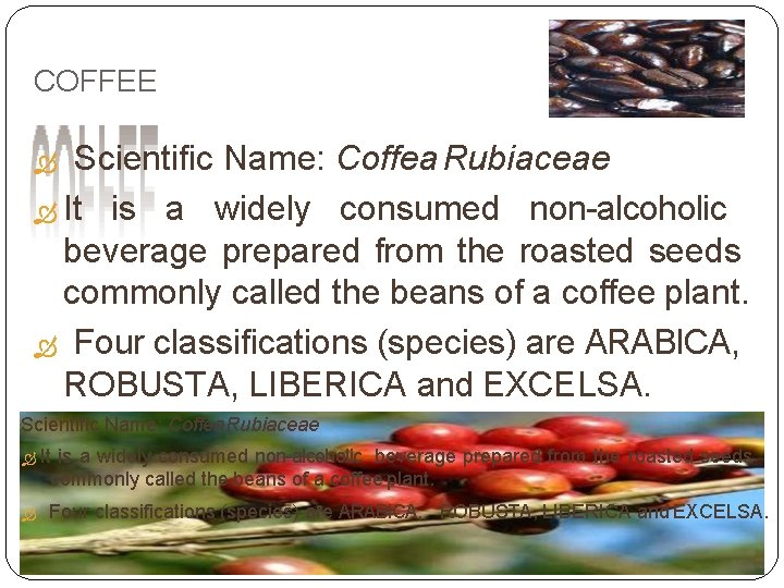 COFFEE Scientific Name: Coffea Rubiaceae It is a widely consumed non-alcoholic beverage prepared from