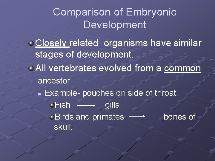 Comparison of Embryonic Development Closely related organisms have similar stages of development. All vertebrates
