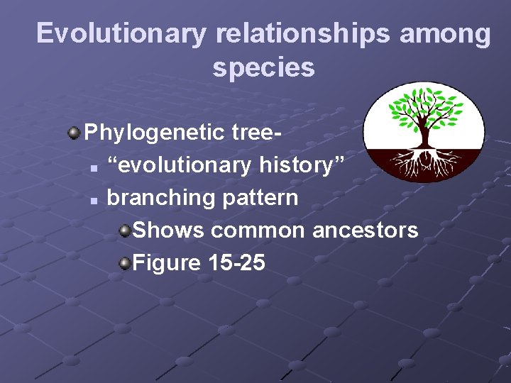"""Evolutionary relationships among species Phylogenetic treen """"evolutionary history"""" n branching pattern Shows common ancestors"""