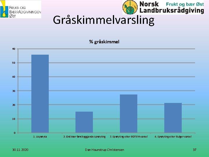 Gråskimmelvarsling % gråskimmel 60 50 40 30 20 10 0 1. Usprøyta 30. 11.