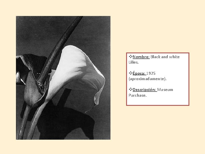 v. Nombre: Black and white Lilies. vÉpoca: 1925 (aproximadamente). v. Descripción: Museum Purchase.