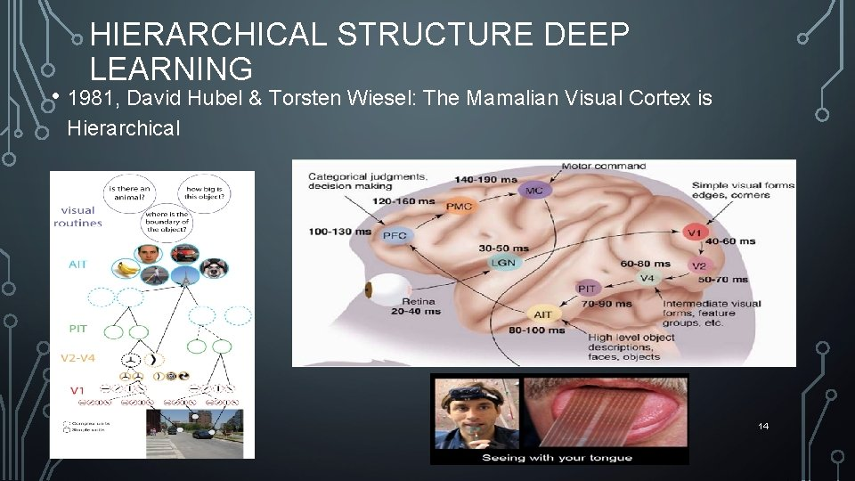 HIERARCHICAL STRUCTURE DEEP LEARNING • 1981, David Hubel & Torsten Wiesel: The Mamalian Visual