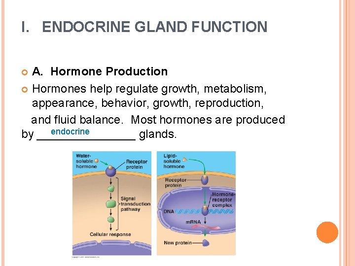 I. ENDOCRINE GLAND FUNCTION A. Hormone Production Hormones help regulate growth, metabolism, appearance, behavior,