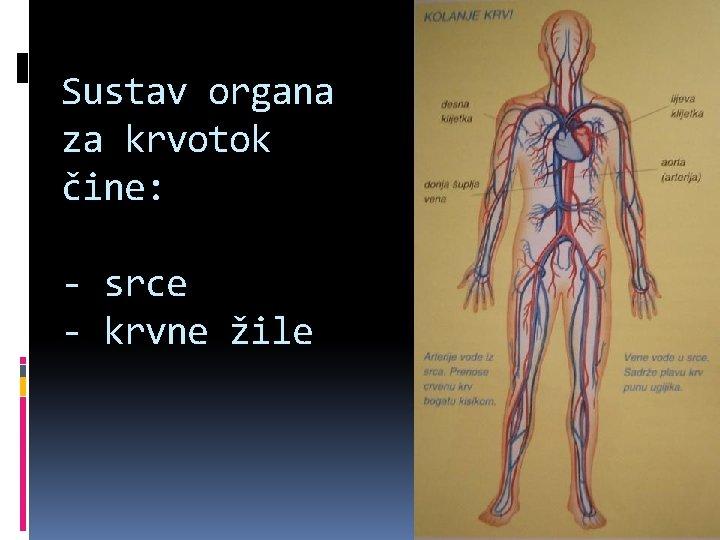Sustav organa za krvotok čine: - srce - krvne žile