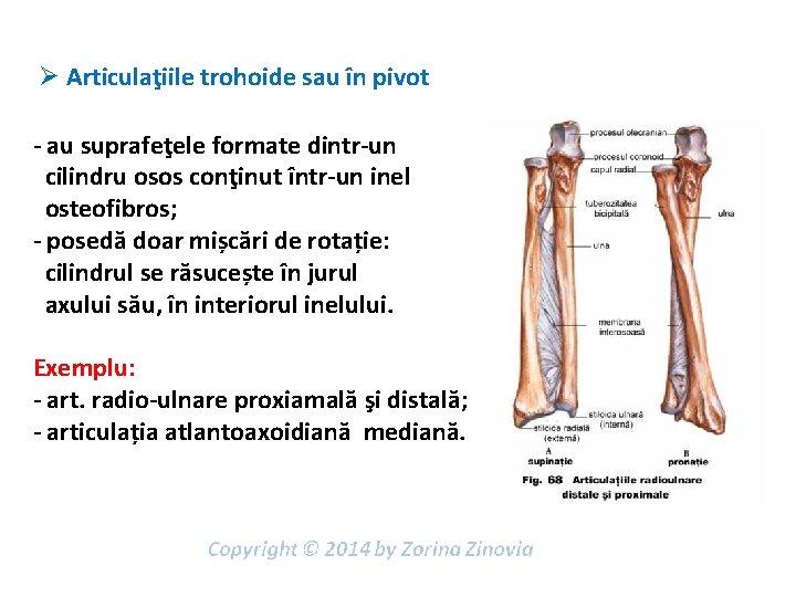 (DOC) ANATOMIA SI BIOMECANICA ARTICULATIILOR COLOANEI VERTEBRALE | Andy Stoica - ceaietc.ro