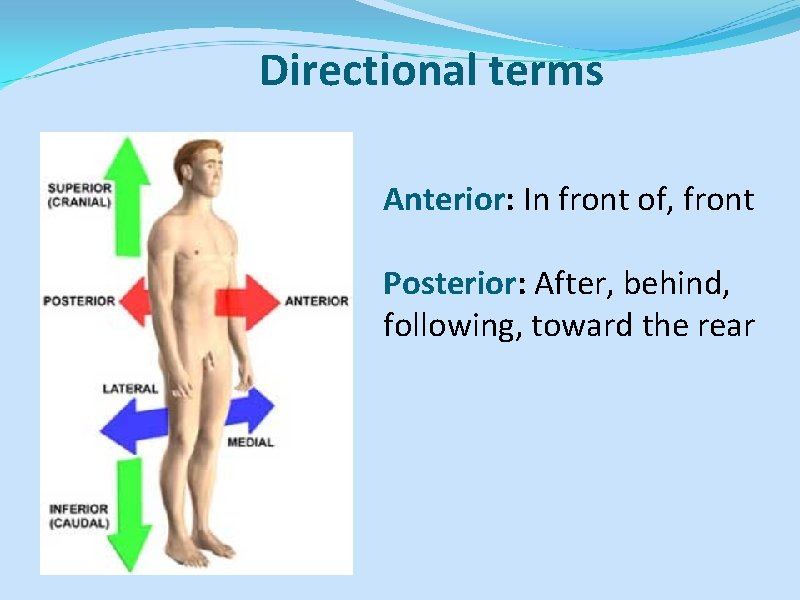 Directional terms Anterior: In front of, front Posterior: After, behind, following, toward the rear
