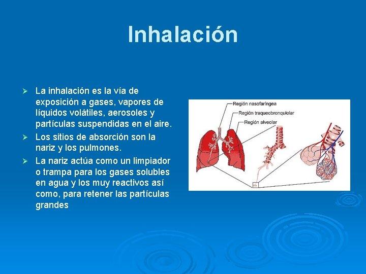 Inhalación La inhalación es la vía de exposición a gases, vapores de líquidos volátiles,