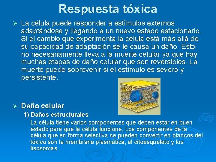 Respuesta tóxica Ø La célula puede responder a estímulos externos adaptándose y llegando a