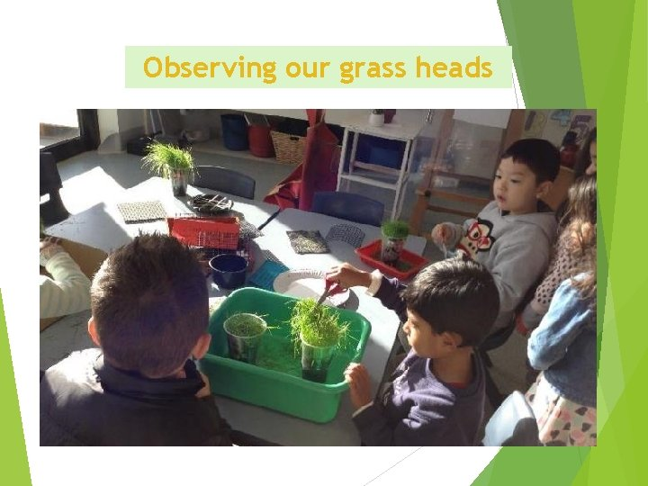 Observing our grass heads
