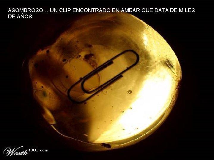 ASOMBROSO… UN CLIP ENCONTRADO EN AMBAR QUE DATA DE MILES DE AÑOS