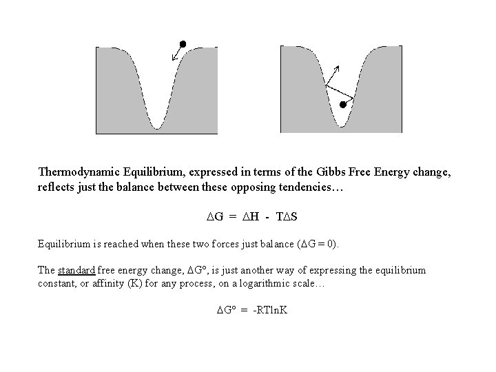 Thermodynamic Equilibrium, expressed in terms of the Gibbs Free Energy change, reflects just the