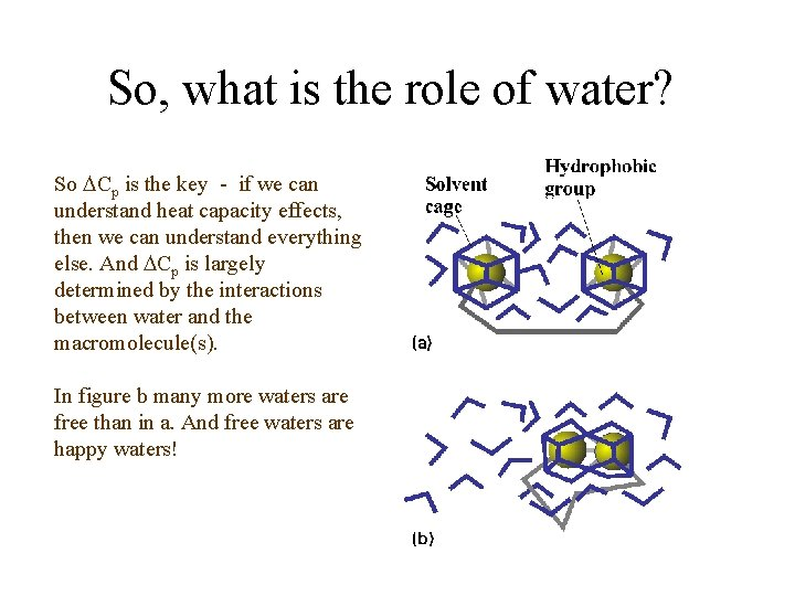 So, what is the role of water? So Cp is the key - if