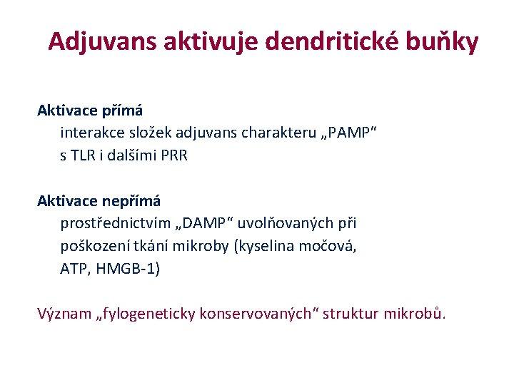 """Adjuvans aktivuje dendritické buňky Aktivace přímá interakce složek adjuvans charakteru """"PAMP"""" s TLR"""