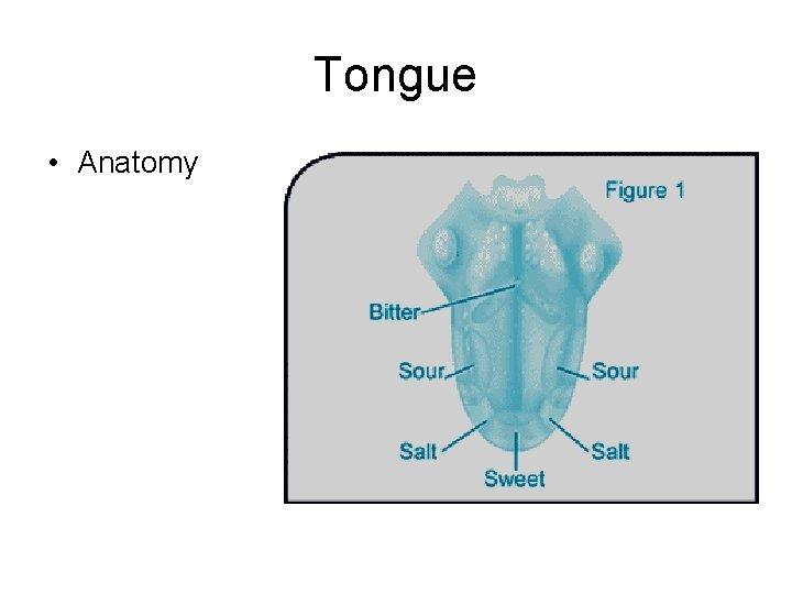 Tongue • Anatomy