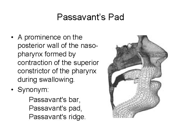 Passavant's Pad • A prominence on the posterior wall of the nasopharynx formed by