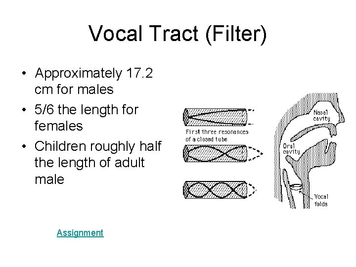 Vocal Tract (Filter) • Approximately 17. 2 cm for males • 5/6 the length
