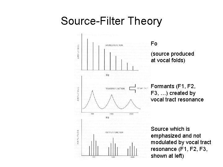 Source-Filter Theory Fo (source produced at vocal folds) Formants (F 1, F 2, F