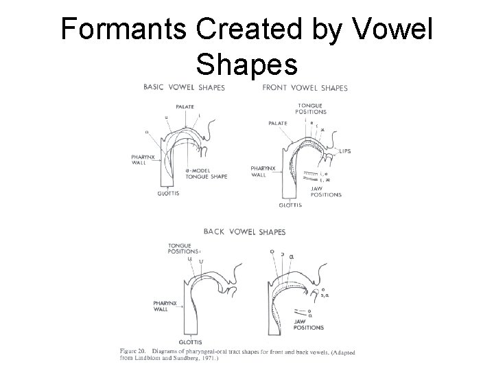 Formants Created by Vowel Shapes