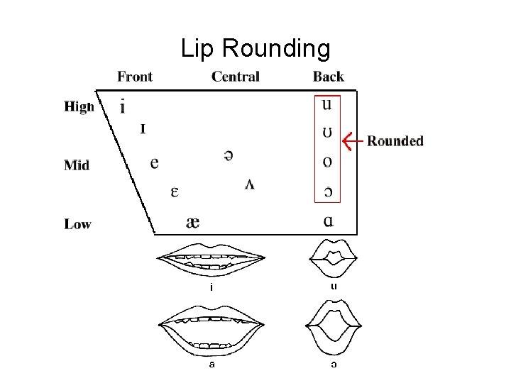 Lip Rounding