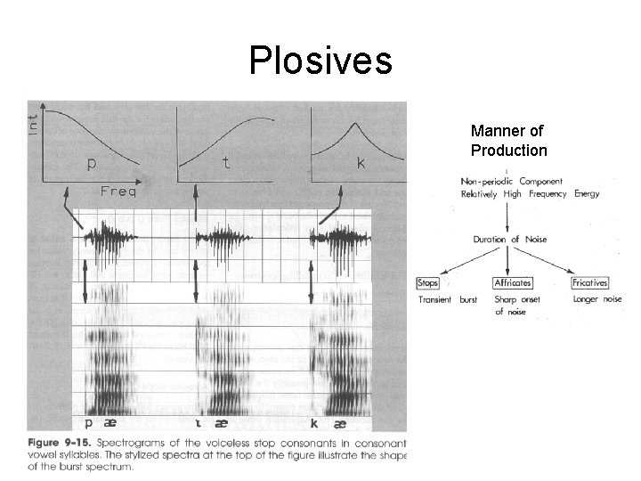 Plosives Manner of Production