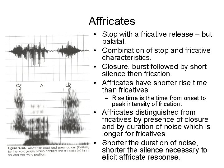 Affricates • Stop with a fricative release – but palatal. • Combination of stop