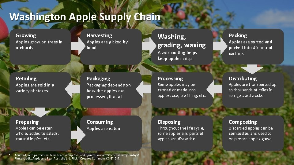 Washington Apple Supply Chain Apples are picked by hand Washing, grading, waxing Packing Retailing