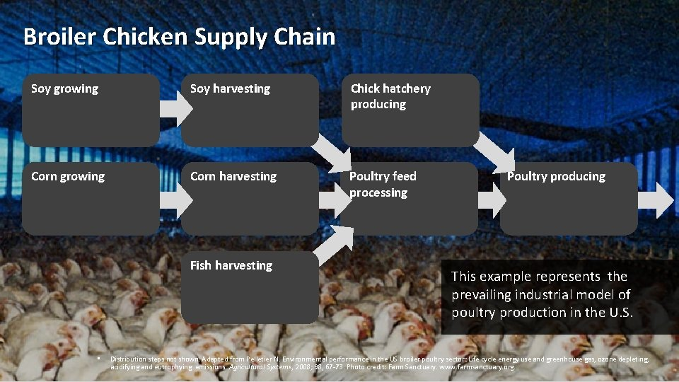 Broiler Chicken Supply Chain Soy growing Soy harvesting Chick hatchery producing Corn growing Corn