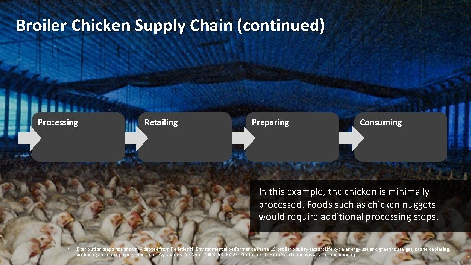 Broiler Chicken Supply Chain (continued) Processing Retailing Preparing Consuming In this example, the chicken